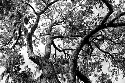 Photograph - Tree Duel by John Rizzuto