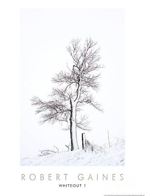 Photograph - Tree During Whiteout 1 by Robert Gaines