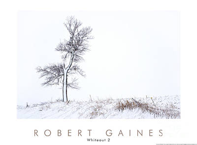 Photograph - Tree During Whiteout 2 by Robert Gaines