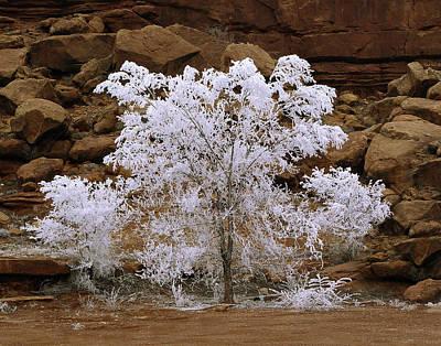 Tree During Winter Inversion Original