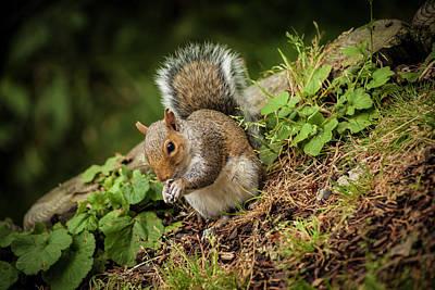 Photograph - Tree Dweller by Stewart Scott