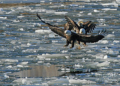 Photograph - Tree Eagles On Ice by Paula Guttilla