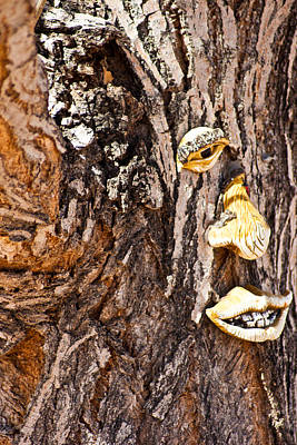 Photograph - Tree Expressions by Colleen Coccia