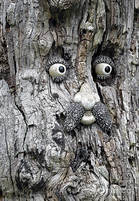 Photograph - Tree Face by Ethna Gillespie