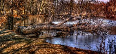 Photograph - Tree Fall by Ray Congrove