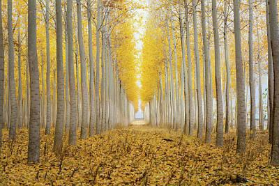 Wall Art - Photograph - Tree Farm In Boardman Oregon Foggy Morning by David Gn