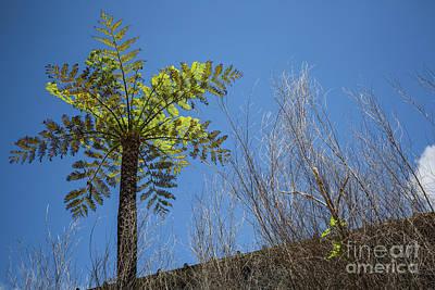 Photograph - Tree Farn by Eva Lechner