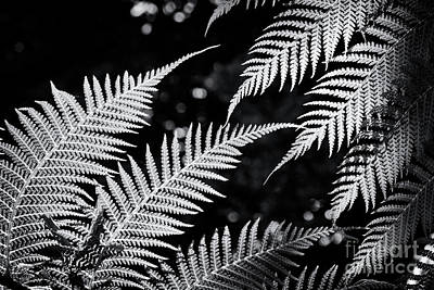 Photograph - Tree Fern Light by Tim Gainey