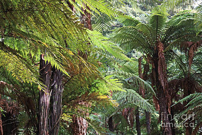 Photograph - Tree Ferns At Rotorua by Nareeta Martin