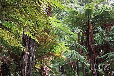 Photograph - Tree Ferns At Rotorua by Nareeta Martin