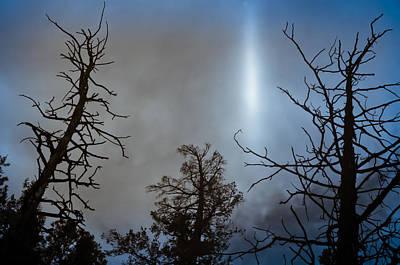 Photograph - Tree Flash by Scott Sawyer