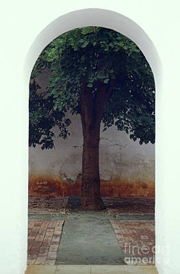 Photograph - Tree Framed By Arch Oaxaca Mexico by John  Mitchell