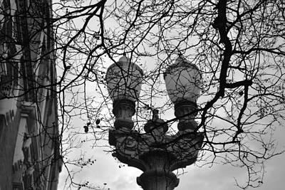 Photograph - Tree Framed Lampost Black And White by Matt Harang