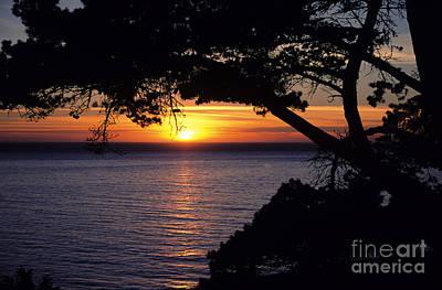 Tree Framing Seascape Sunset Art Print