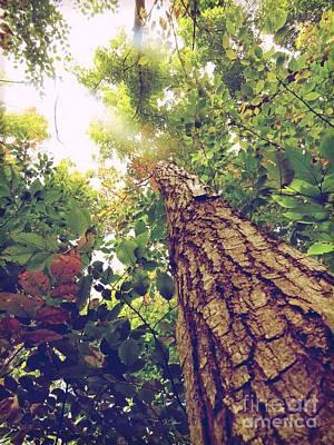Photograph - Tree  Life by France Laliberte