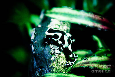 Tree Frog Art Print by Brenton Woodruff