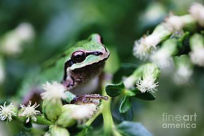 Digital Art - Tree Frog Close Uo by Nick Gustafson