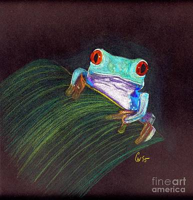 Rain Forest Drawing - Tree Frog by Crystal Wacoche