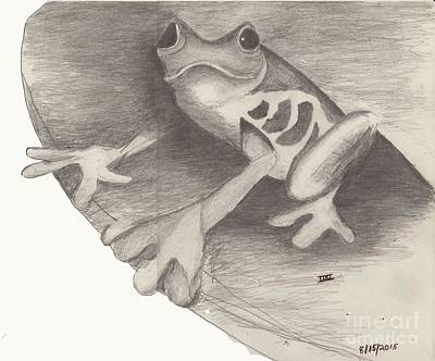 Rain Forest Animals Drawing - Tree Frog by David Jackson
