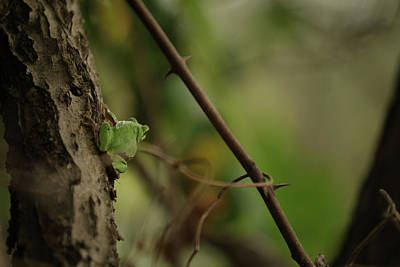 Photograph - Tree Frog by Hyuntae Kim