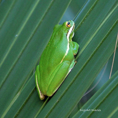 Tree Frog Of The Fronds Art Print