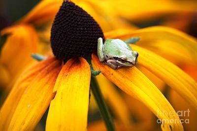 Digital Art - Tree Frog On Flower 2 by Nick Gustafson
