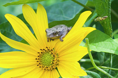 Michael Barry Photograph - Tree Frog On Flower And Visitor by Michael Barry