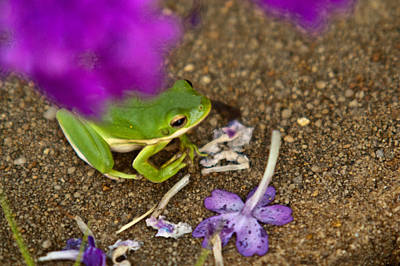 Photograph - Tree Frog Under Flower by Douglas Barnett