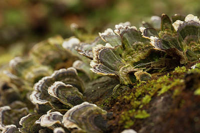 Photograph - Tree Fungus 2 by Mike Eingle