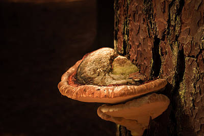 Photograph - Tree Fungus As Art by Joni Eskridge