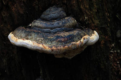 Photograph - Tree Fungus by Tikvah's Hope
