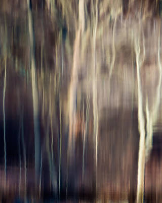 Photograph - Tree Ghosts by Bill Wakeley