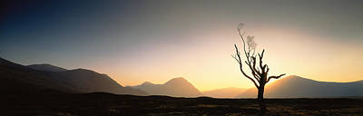 Tree Glencoe Highlands Scotland Art Print