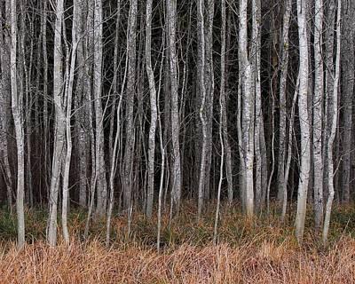 Photograph - Tree Grove by Bill Kellett