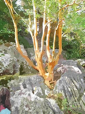 Tree Growing From Rock Killarney  Art Print