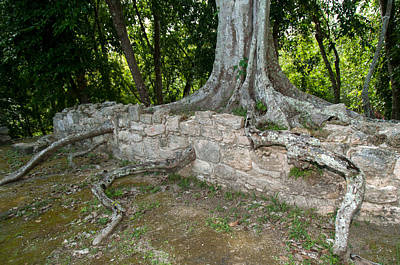 Digital Art - Tree Growing Through The Ruins In Oxtankah by Carol Ailles