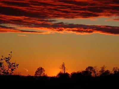 Photograph - Tree Horizon Sunset by Jim Taylor