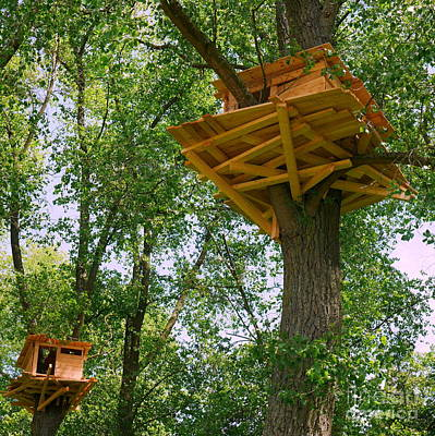 Photograph - Tree Houses In Bruges by Lexa Harpell