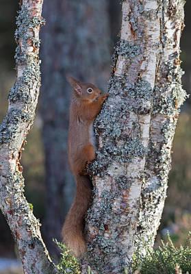 Photograph - Tree Hugger by Peter Walkden
