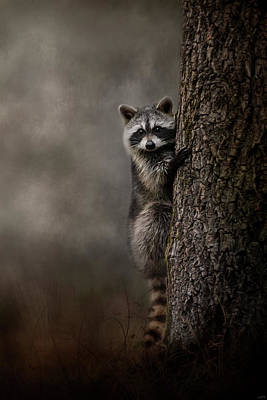 Photograph - Tree Hugger Raccoon Art by Jai Johnson