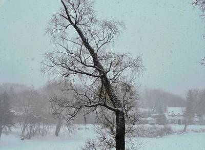Photograph - Tree In A Blizzard by Stephanie Moore