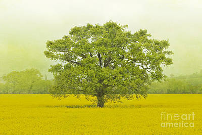 Photograph - Tree In A Field Of Gold by Terri Waters
