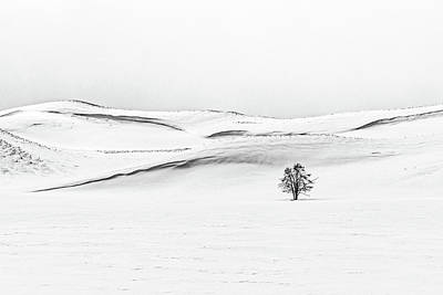 Photograph - Tree In A Field Of Snow - Yellowstone by Stuart Litoff