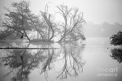 Tree In A Lake Art Print by Pravine Chester