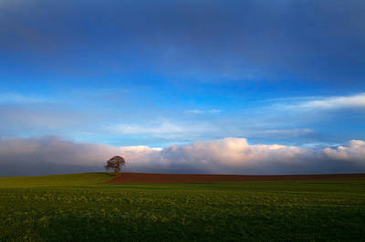 Farmscapes Photograph - Tree In Arable Farmland Near Carlow by Panoramic Images