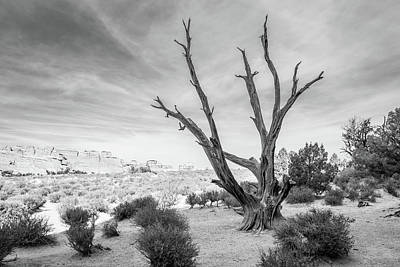 Photograph - Tree In Arches National Park by Lee Coursey