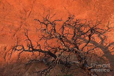 Tree In Arches Art Print by Stan and Anne Foster