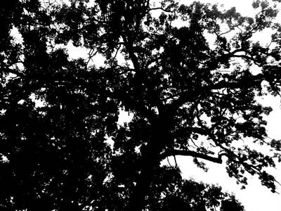 Winter Animals Rights Managed Images - Tree in Black and White Royalty-Free Image by April Patterson