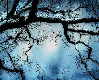 Photograph - Tree In Blue - Nature Art by Ann Powell