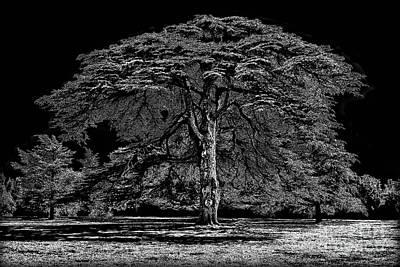 Tree In England Art Print